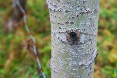 глаза, дерево, взгляды природы стоковое изображение