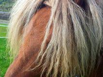 Глаза заволакивания гривы лошадей Стоковое Изображение