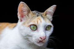 Глаза кота в дневном времени Стоковая Фотография RF