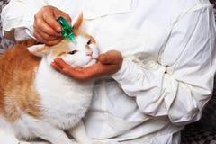 Глаза кота обслуживания Стоковое фото RF