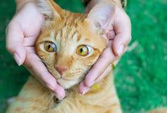 Глаза кота с женскими руками на лужайке используя обои или предпосылке для животных работают Стоковые Изображения RF
