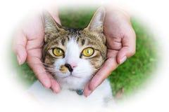 Глаза кота с женскими руками на лужайке используя обои или предпосылке для животных работают Стоковая Фотография RF