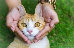 Глаза кота с женскими руками на лужайке используя обои или предпосылке для животных работают Стоковое Изображение