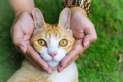 Глаза кота с женскими руками на лужайке используя обои или предпосылке для животных работают Стоковое Изображение RF