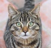 Глаза кота Стоковые Фото