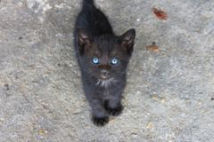 Глаза кота Стоковое Изображение