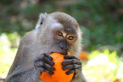 Глаза обезьяны Стоковая Фотография