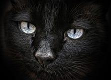 глаза черного кота Стоковые Изображения
