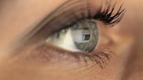 Глаз девушки женщины смотря монитор, занимаясь серфингом интернет акции видеоматериалы