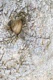 Глаз дерева Стоковое фото RF