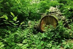 Глаз леса стоковые изображения rf