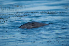 Глаз дельфина стоковое изображение