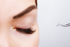 Глаз женщины с длинними ресницами Расширение ресницы Плетки, конец вверх, выбранный фокус Стоковое Изображение