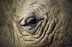 Глаз животного с фокусом на глазе Стоковое фото RF