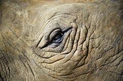Глаз животного с фокусом на глазе Стоковое Фото