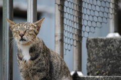 Глаз-закрытый кот Стоковое фото RF