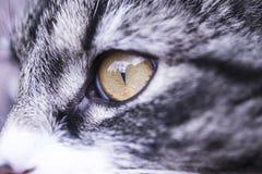 Глаз кота Стоковые Фотографии RF