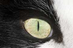 Глаз кота Стоковое Фото