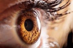 Глаз макроса стоковая фотография rf