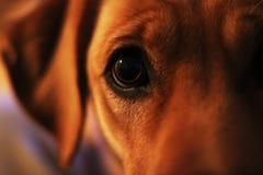 Глаз мигателя Стоковое фото RF