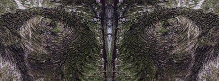 Глаз природы Стоковая Фотография