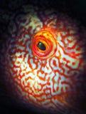 Глаз рыб Стоковые Фото