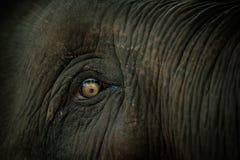 глаз s слона Стоковые Фотографии RF