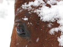 Глаз Snowy Стоковые Фото