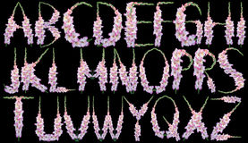 Гладиолус алфавита Стоковая Фотография RF