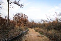 Глен розовый Техас Стоковая Фотография