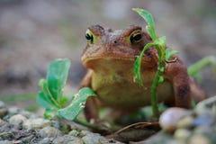 Г-н жаба Стоковое фото RF