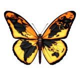 Глобальная бабочка Стоковые Изображения