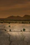 Глобальное потепление, умерло и треснутая почва в засушливом сезоне, взгляде  Стоковая Фотография RF