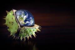 Глобус защищенный в раковине каштана, символе environmen Стоковое Изображение