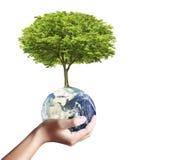 Глобус и дерево земли в его руке Стоковая Фотография