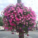 Глобус цветков стоковое фото rf
