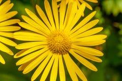 глубина падает желтый цвет воды съемки макроса цветка поля низкий Стоковое Изображение