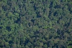 Глубокая ая-зелен предпосылка текстуры дерева джунглей леса Стоковая Фотография
