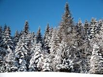 Глубокая зима Стоковая Фотография