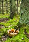 Глубокая корзина леса и грибов Стоковое фото RF