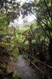 Глубокие гаваиские джунгли Стоковое Изображение RF