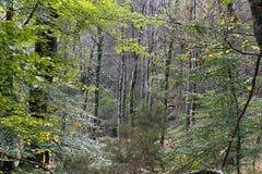 Глубокие древесины от Geres Стоковая Фотография RF