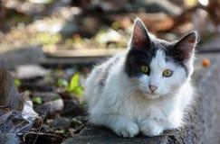 Глубокий взгляд кота Стоковые Изображения