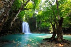 Глубокий водопад леса стоковое фото