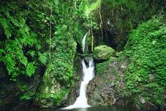 Глубокий водопад леса стоковое фото rf