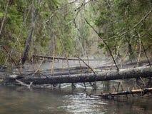 Глубокий лес Стоковые Изображения