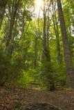 Глубокий лес Стоковая Фотография