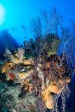 Глубокий коралловый риф стоковые фото