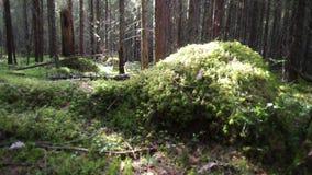 Глубокий русский лес видеоматериал