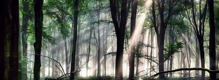 Глубокий свет утра леса Стоковая Фотография RF